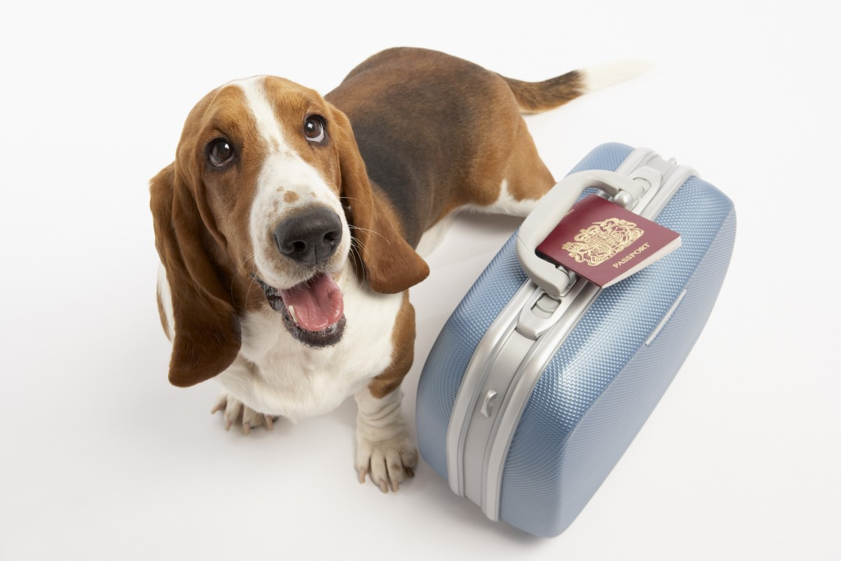 Image result for Pet Travel Insurance
